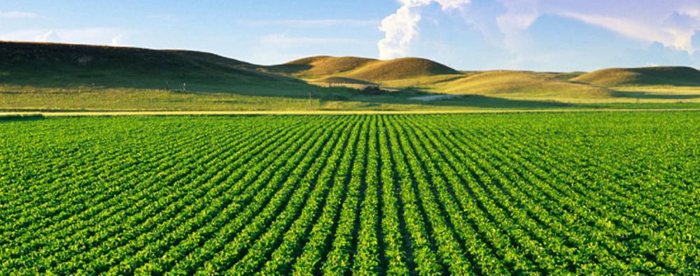 Agriculture la zambie sollicite l aide du maroc for L agriculture