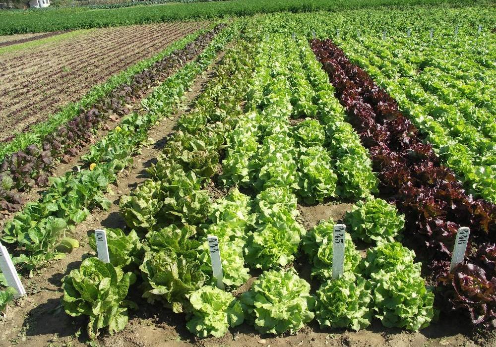d217f198882 Production biologique   Le Maroc communique sur ses labels ...